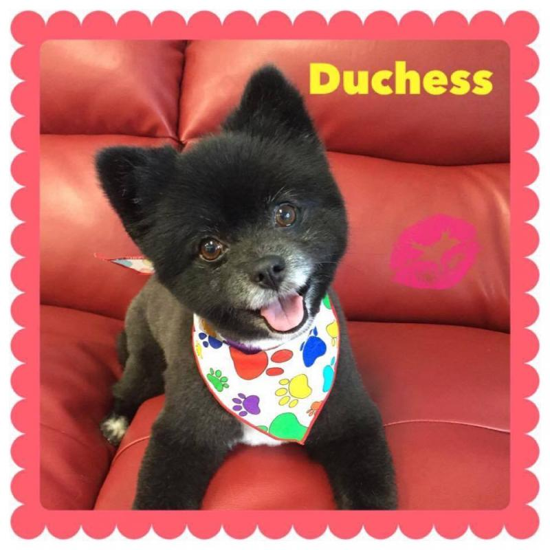 Nanaimo's Best Dog Grooming